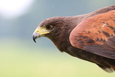 shallow photo of hawk