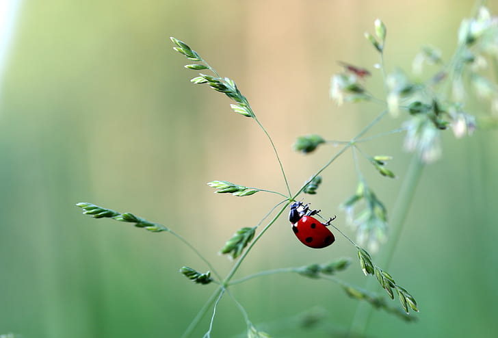 selective focus photography of ladybird perched plant branch