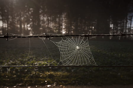 spider web on balb wire