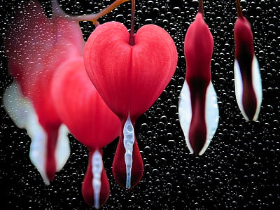 macro photography of red-and-white petal floewrs