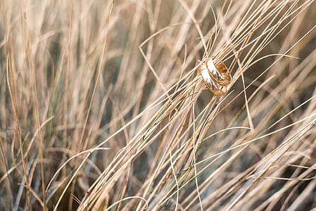 gold-colored band rings on brown grass