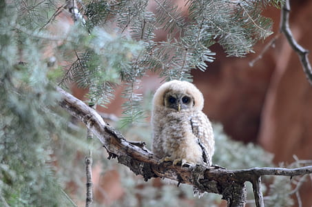white owl on tree branch during daytime