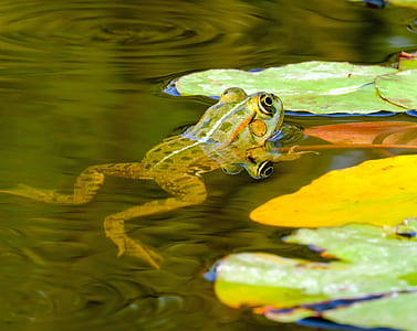 shallow photography of green frog