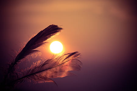 feather in bokeh photography during sunset