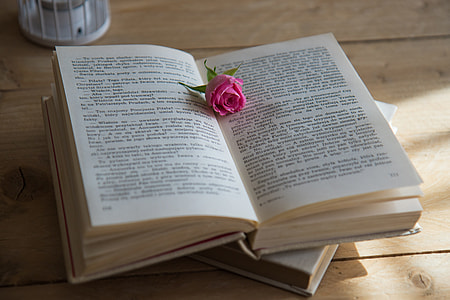 opened book with pink rose on top of it