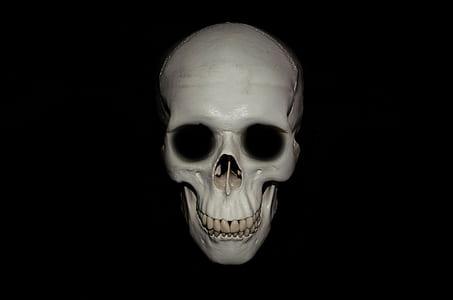 gray skull decor