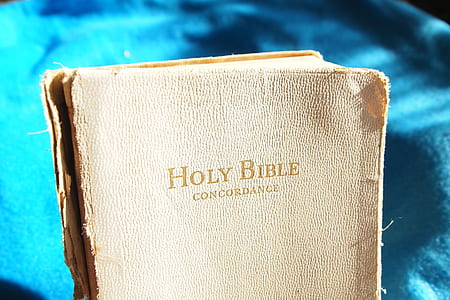 shallow focus photography of Holy Bible