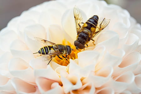 two bees perch on pollen