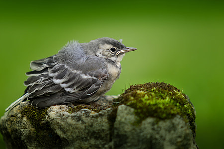 shallow focus photography of gray bird on stone