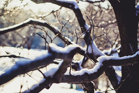 Wither Tree With Snow on Branch