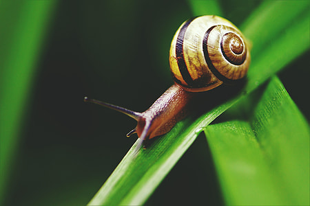 Closeup macro shot of a snail