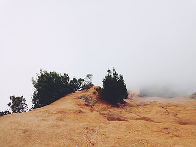 low angle photography of hill with trees and fog during daytime