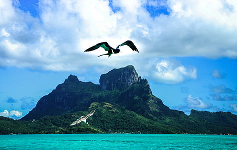 two birds on flight behind mountain