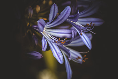 photography of a white-and-purple petaled flowers
