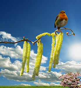 white and brown bird on yellow flowering tree under white clouds blue skies daytime