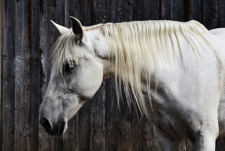 white horse standing in black wall