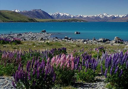 landscape of lavender field near seashore during daytime