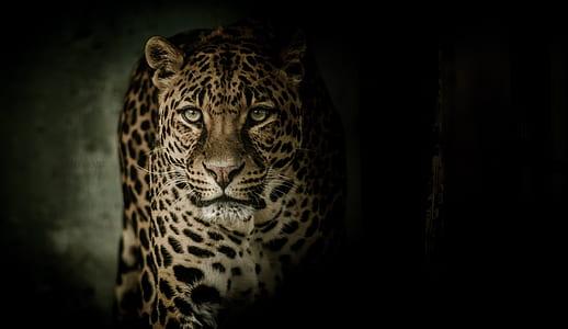 cheetah in close-up photo