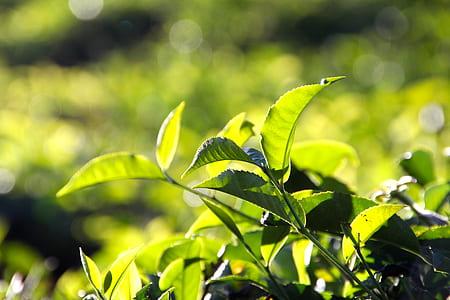 tilt shift view of green plants