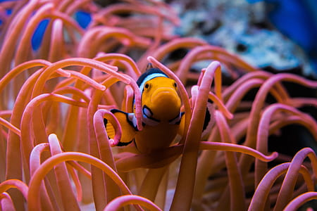 photography of clown fish on corrals