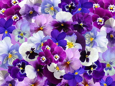 pink, white, and purple flowers
