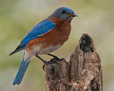 focus photography of blue and brown bird perched on tree