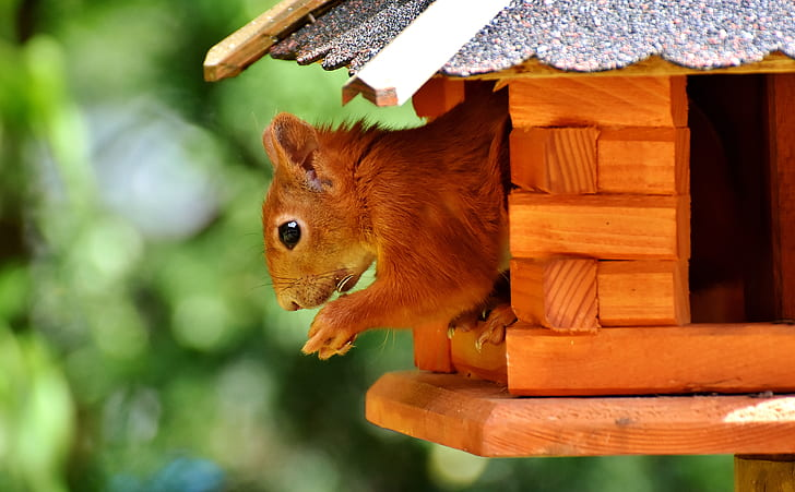 close up photo of squirrel on house