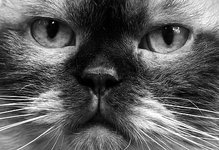 closeup photo of cats face
