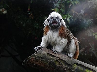 white 4-legged animal on tree log during daytime