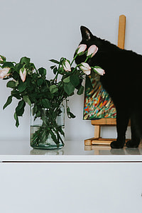 Black cat with flowers and a painting