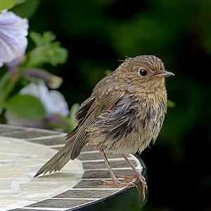 selective focus photography of inca humming bird
