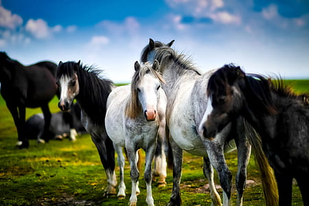 horses, horse, herd, farm, ranch, rural