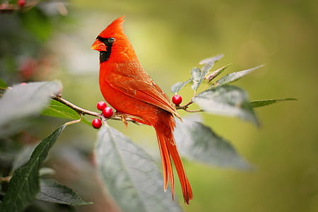perching red bird on green leaf plant