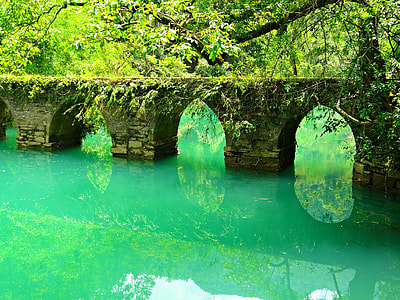 brown bridge with moss on water formation