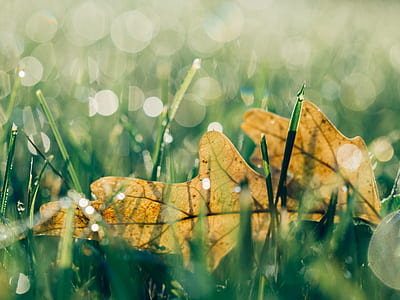 leaf, grass, bokeh, nature, autumn, crisp