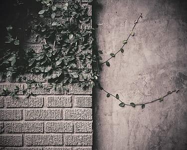 green plant decor