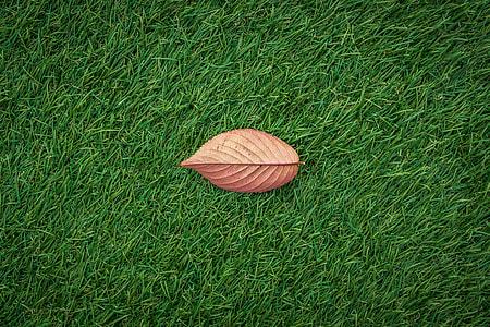 A fall leaf lies on green grass texture