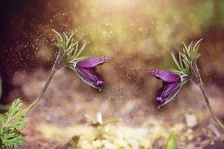 purple petaled flower photo