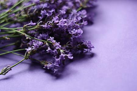 purple petaled flower on purple surface