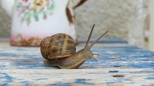 brown garden snail on wooden board