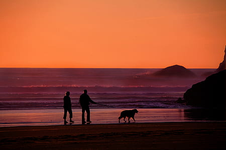 silhouette photo of two people walking beside the beach with dog