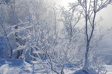 snows on tree
