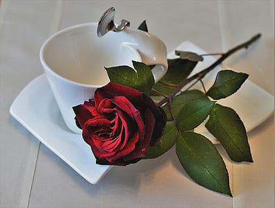red rose beside white ceramic cup on saucer