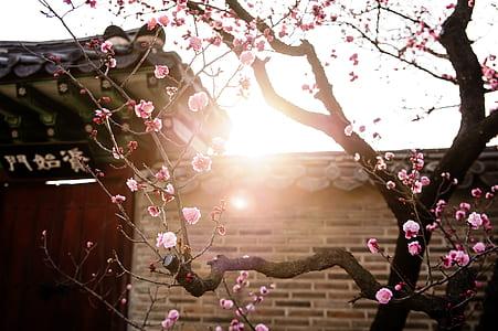 photo of cherry tree