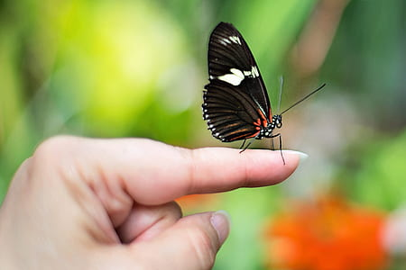 close-up photography of black butterfly on index finger
