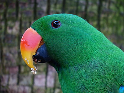 green feathered bird with red and yellow beack