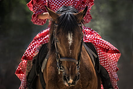 person wearing red and white polka-dot clothes riding on brown and black horse