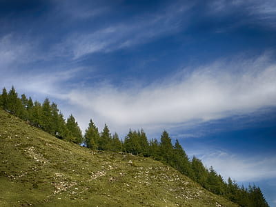 Green Pine Trees Under Clear Blue Sky