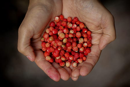 bunch of berries on person's hand