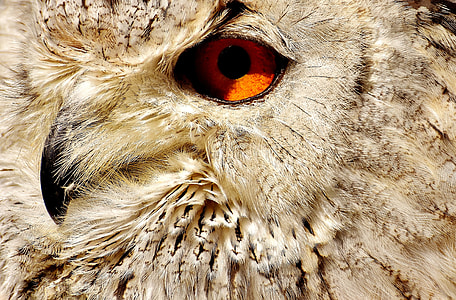 white and brown owl photography